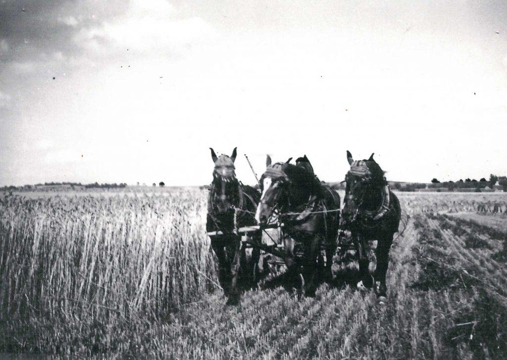 Pferde bei der Feldarbeit