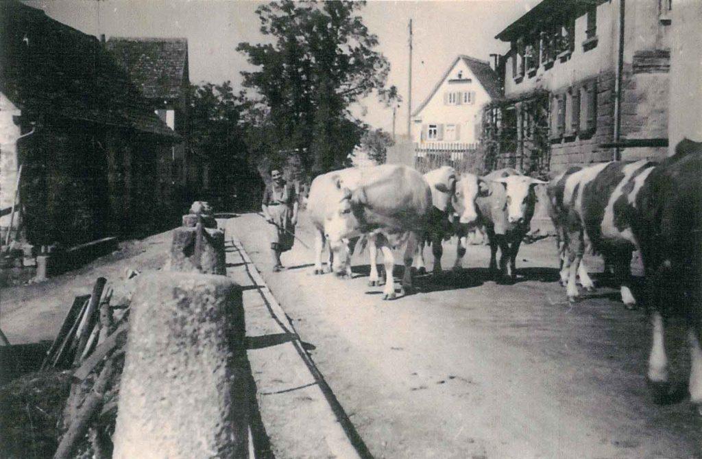 Viehtrieb auf der Dorfstraße mit Blick Richtung Lindensteige