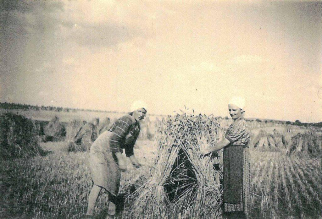Bei der Getreideernte mit Garben