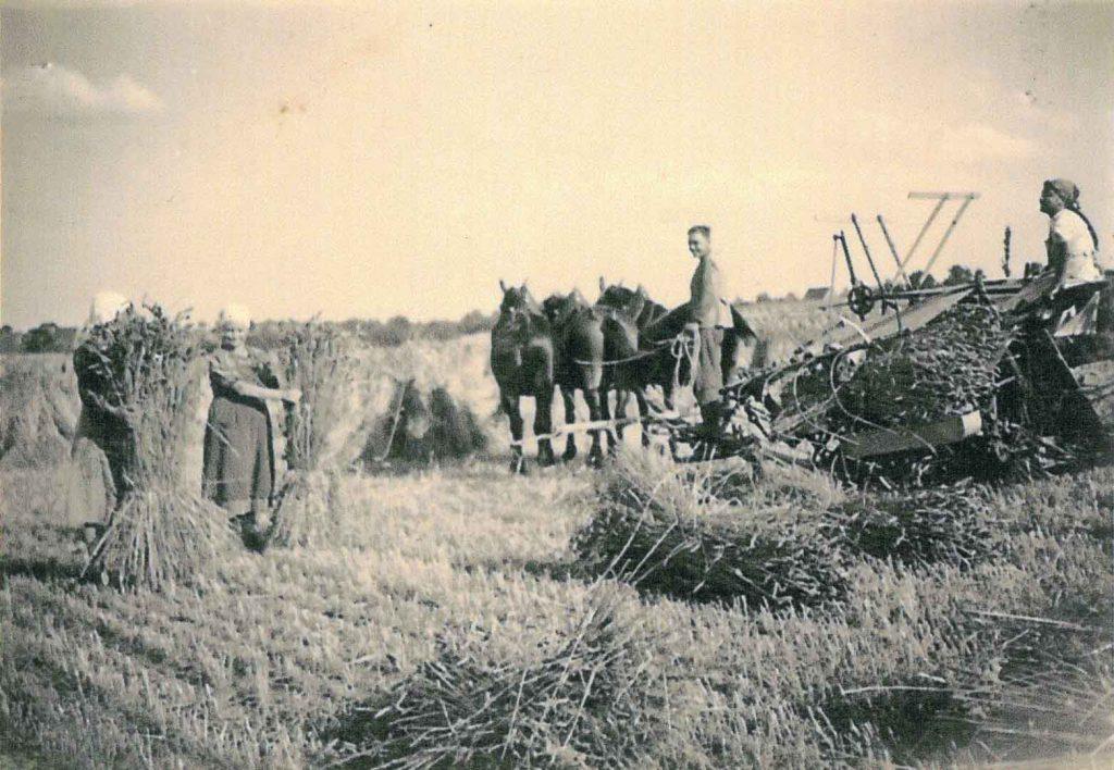 Bei der Getreideernte mit Dreschmaschine