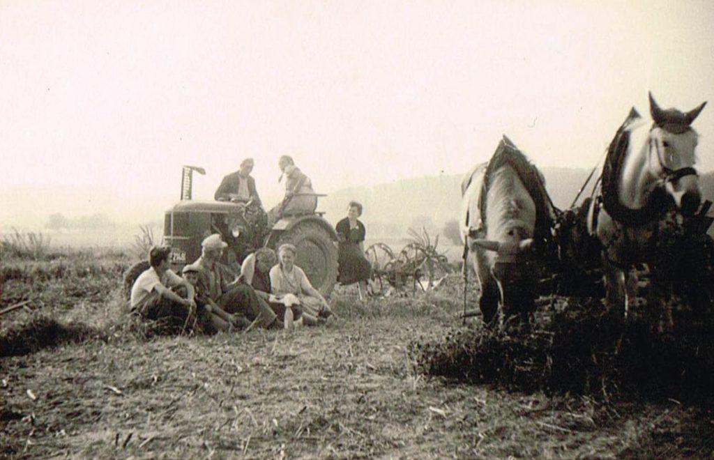 Erwin Düring mit Helfern bei der Kartoffelernte (1950er Jahre)