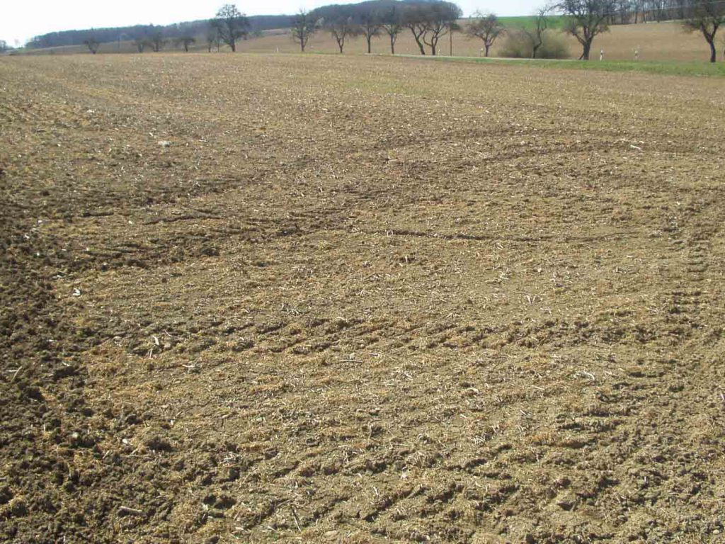Erfrorener Weizen im Jahr 2012 nach länger anhaltenden Kahlfrösten. Hier z.B. am Fischteich Fritz, Blickrichtung Michelbach.